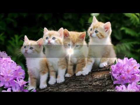 10 cose che non sai sui gatti!