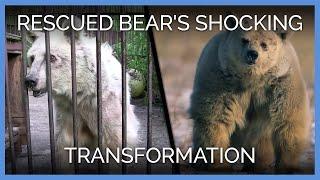 Rescued Bear's Shocking Transformation | PETA Animal Rescues