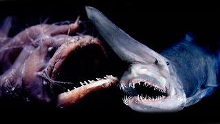 Top 10 Creepy Deep Sea Creatures