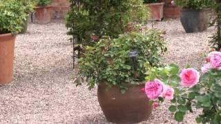 #482 David Austin Roses 2011 - Die unenglische englische Rose Kew Gardens