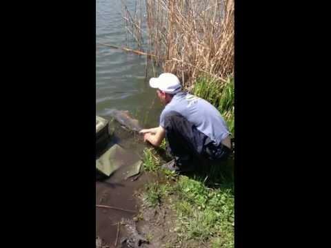 как ловить карпа в мутной воде