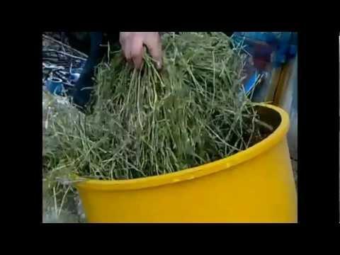 Травяная мука как сделать