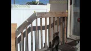 Video Cat Jump Fail- Cat Gets Shocked by Electric Wired Handrail / Fence MP3, 3GP, MP4, WEBM, AVI, FLV Mei 2017