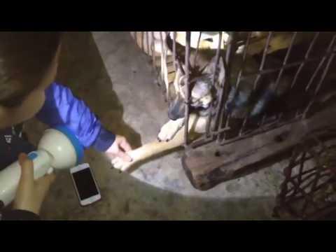 Xót xa với hình ảnh chú chó trong lò mổ cầu cứu con người