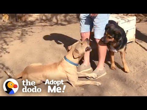 cane-randagio-si-rifiuta-di-essere-salvato-finche-non-arriva-il-suo-amico