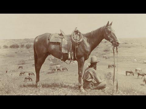 The Cowboy's Horse