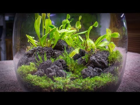 How to Make a Venus Fly Trap Terrarium