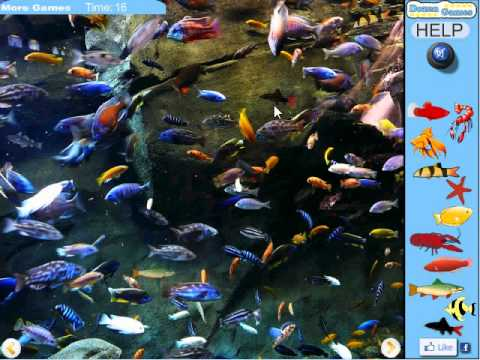 Video of Underwater Hidden Object