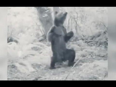 """Еколог показав кумедний танець """"п'яного"""" ведмедя (ВІДЕО)"""