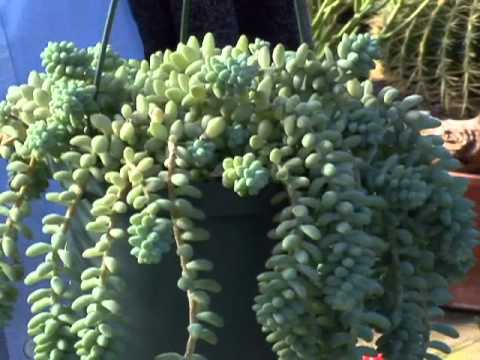 Kansas Healthy Yards Succulent Plants For Your Home