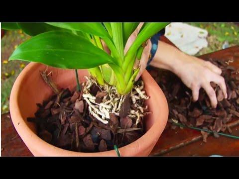Cultivo de Orquídea - Plantio de Orquídea - Cursos CPT