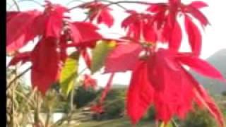 Lalupate Fulyo Banaima ( Original Song)