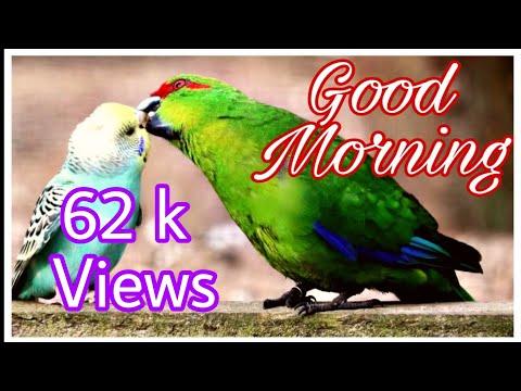 Love SMS - Good Morning  Good Morning WhatsApp Status