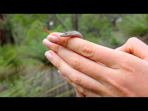 Amy Wild Adventures 4: Snake or Lizard? (видео)