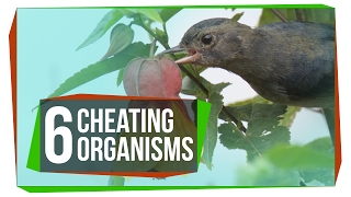 6 Organisms That Cheat the System by  SciShow