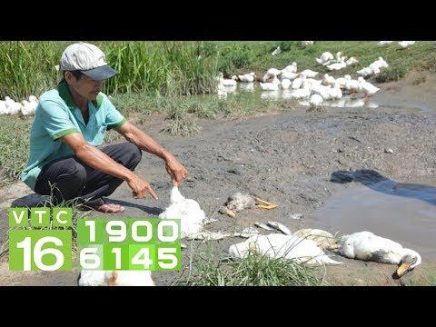 Dịch tả ở ngan, vịt: Căn bệnh cực kỳ nguy hiểm I VTC16 - Thời lượng: 6 phút, 27 giây.