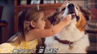 映画『僕のワンダフル・ジャーニー』本編映像