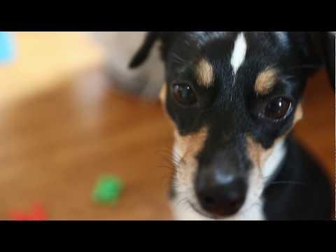 penny-il-cane-che-sa-comporre-il-proprio-nome