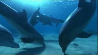 Dolphin Dream-Tom Barabas