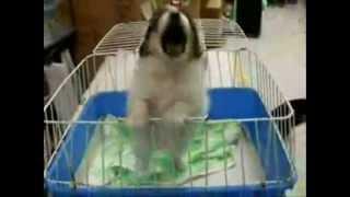 http://legadodeaquiles.blogspot.comeste es un perro pero curioso es que el perro pide agua