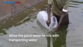 How to stock a fish pond