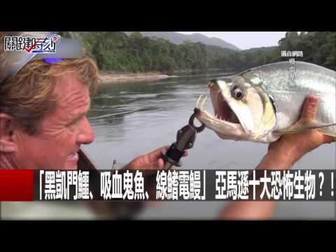 【恐怖食人魚】11歲少年跌入魚池撈起僅剩一堆白骨