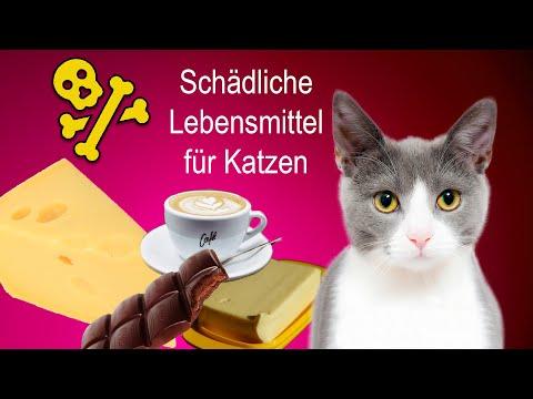 Katzen: Diese Lebensmittel schaden der Katze