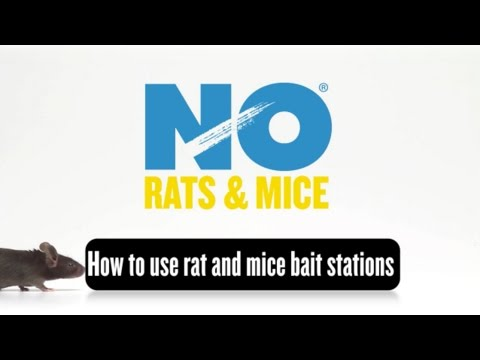 How to Use NO Rats and NO Mice Bait Stations