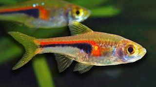 Top 10 Aquarium Fish For Beginners by Aquarium Co-Op