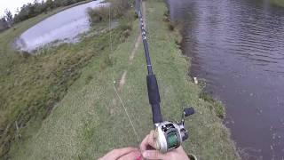 Pesca no inverno??? veja como é (achei carpas mortas)