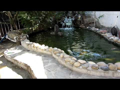 2000 Gallon Koi Pond after 3 weeks with new filtration system installed (after)