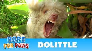 I didn't realize the poodle was blind until the rescue was over!!! by Hope For Paws
