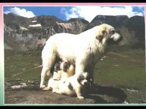 refuge - song about the pyrenees chanson pyreneen.