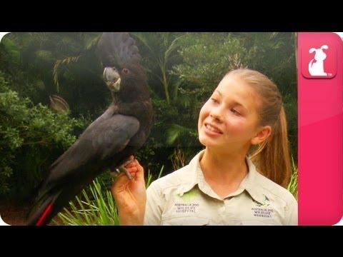 Bindi & Robert Irwin feature – Black Cockatoo (Euli) – Growing Up Wild