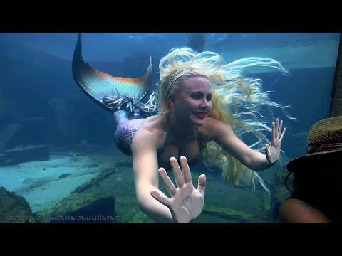 The Real Mermaid Melissa Up close Encounters