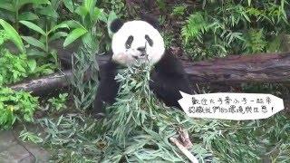 2016國際生物多樣性日的主題是「主流化生物多樣性─永續人類生存與生計」,臺北市立動物園與中華民國自然生態保育協會合辦「擁抱...