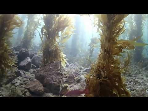 Dive Trip March 2014