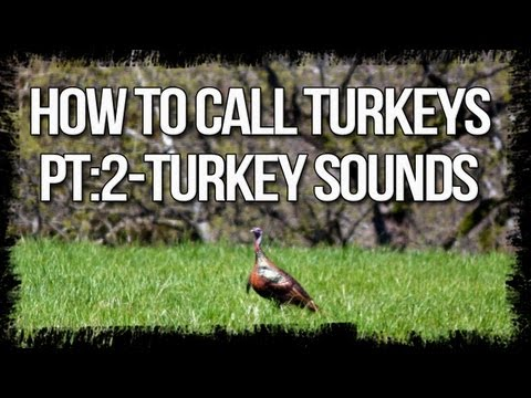 turkeys - In the second part of our calling series,Jared talks about the 3 main turkey sounds you need to know before hitting the spring turkey woods,check it out! And...