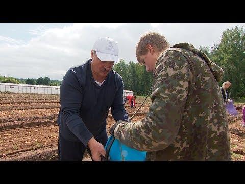 Лукашенко у вихідні займався збиранням картоплі на своїй ділянці (відео)