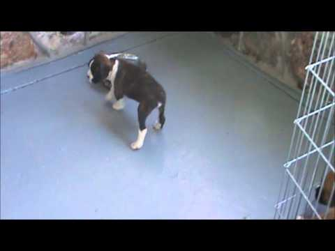 A video of Molly playing on the porch.