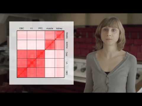 Evolution of Lipids in Human Brain