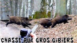 Chasse Au Sanglier, Cerf, Daguet, Chevreuils : Au Cœur De La Battue En HD