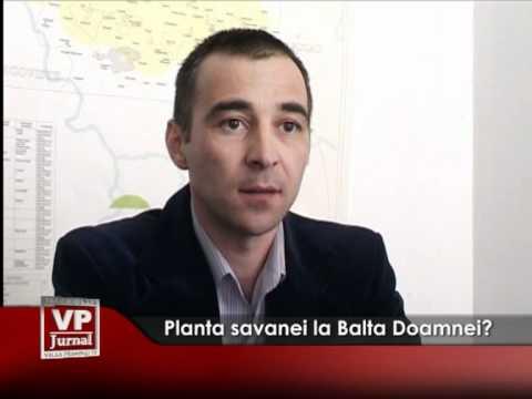 Planta savanei la Balta Doamnei?