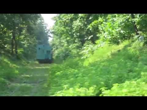 Green Train Through Dense Green Forest