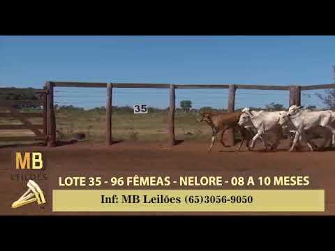 199º LEILÃO VIRTUAL MB LEILÕES