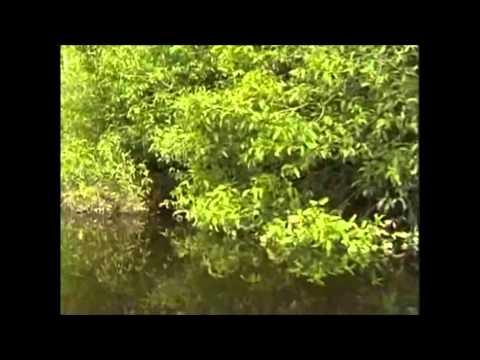 Wildfang: Diskus vom Rio Negro - Dokumentation