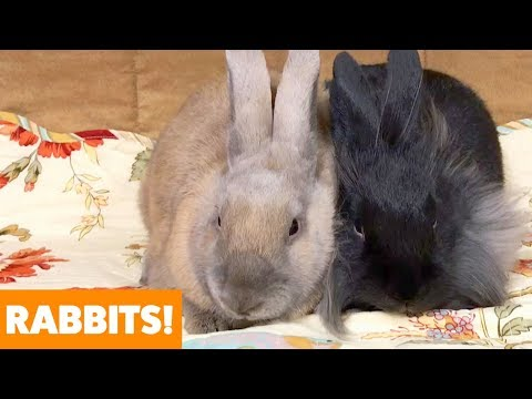 Funny animals - Adorable Rabbits  Funny Pet Videos