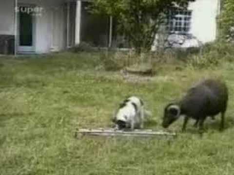 吃硬不吃軟的狗,只能說牠活該!