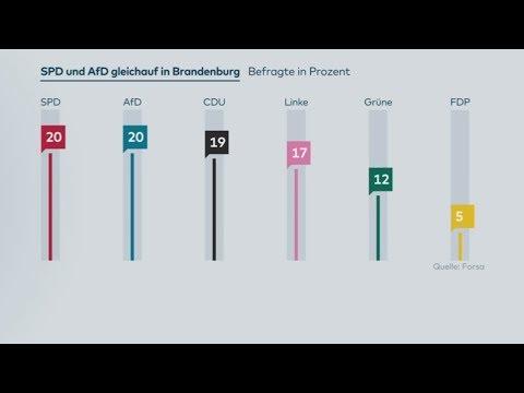 Brandenburg: SPD und AfD gleichauf - Grüne im Aufwind