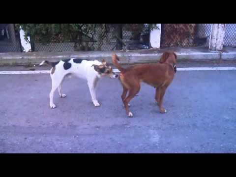 σεχ - ΧΑΧΑΧΑΧΑΑ dogs sex σκυλια σεξ http://adf.ly/PWzZG.